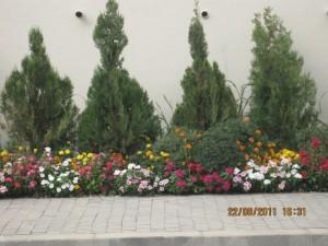 Pionee  September-2011 006